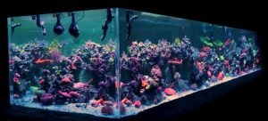 2000 gallon reef tank