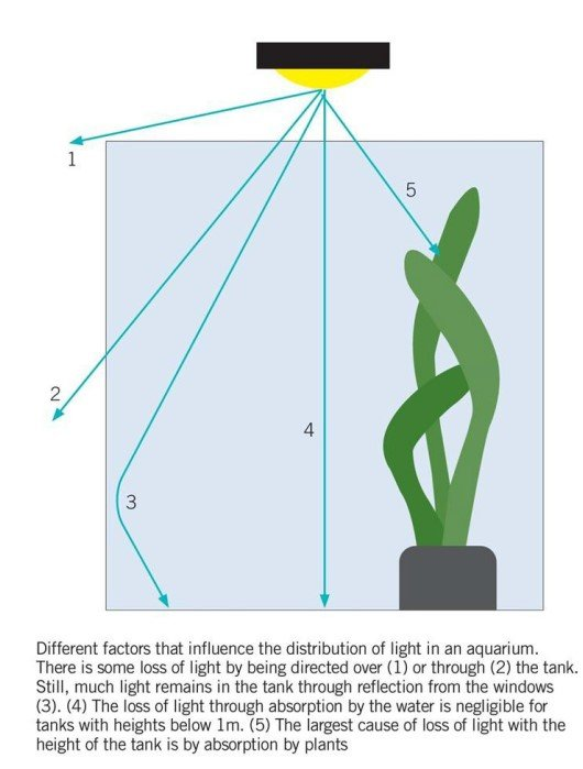 Light Distribution